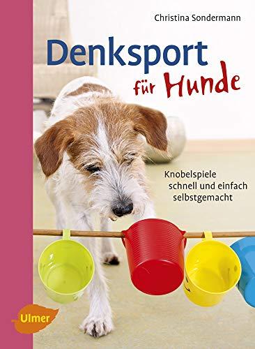 Denksport für Hunde: Knobelspiele schnell und einfach...
