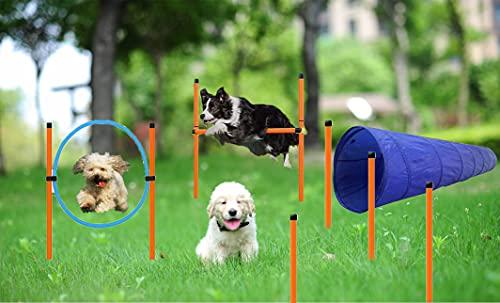 Agility-Ausrüstungs Set für Hunde, Agility für Hunde, Agility...