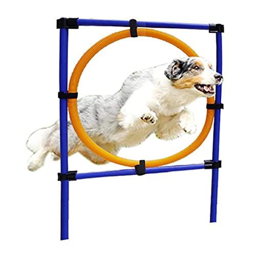 QHWJ Hunde Outdoor Games Agility Übung Trainingsgeräte Agility...