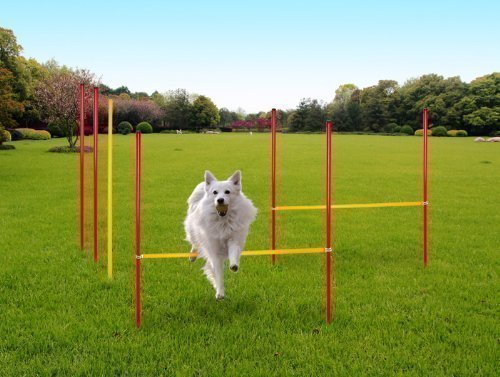 Karry Hunde Agility Set Training Hundesport Hürden Slalom...