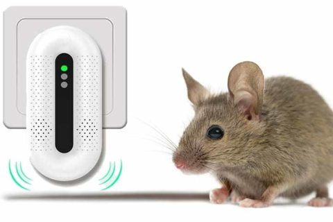 Mäuse Ultraschall