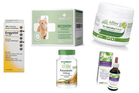 Immunkuren für Katzen