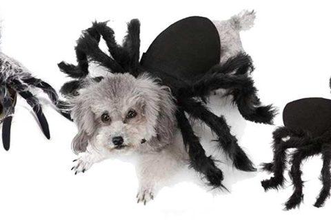 Spinnenkostüme für Hunde