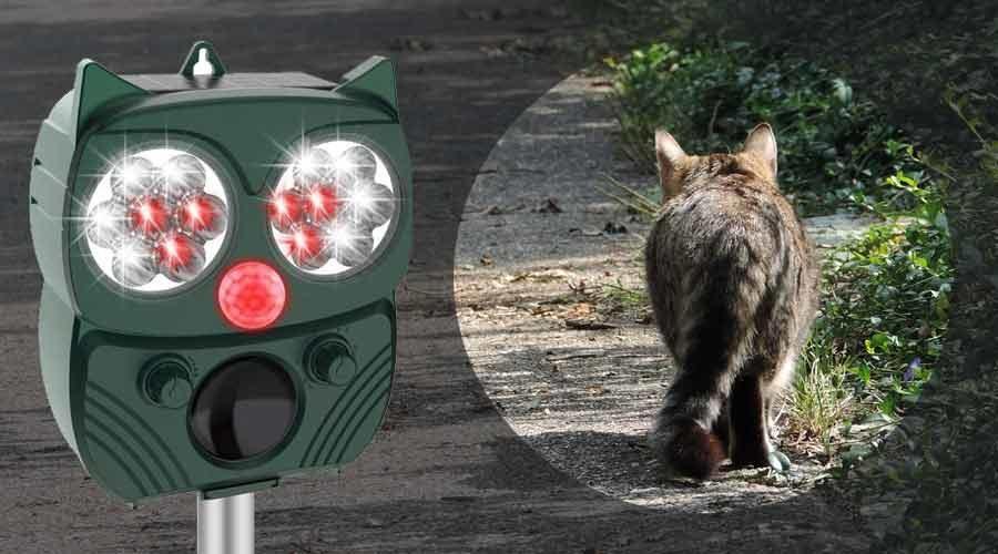 Katzen Ultraschallgerät