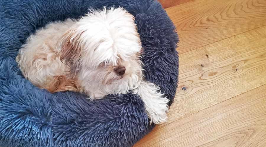 kuschlige Hundebetten